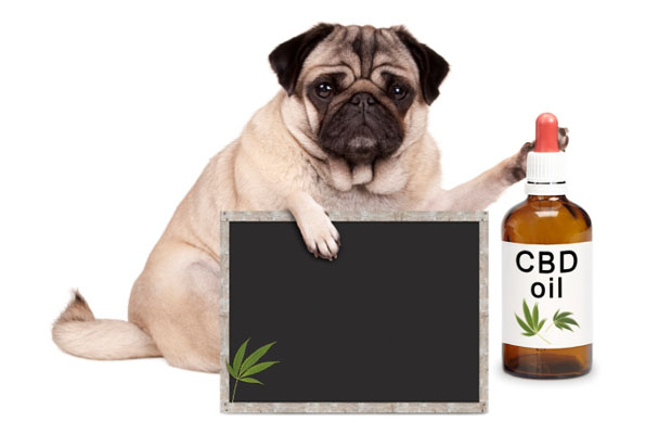 cbd-for-dogs