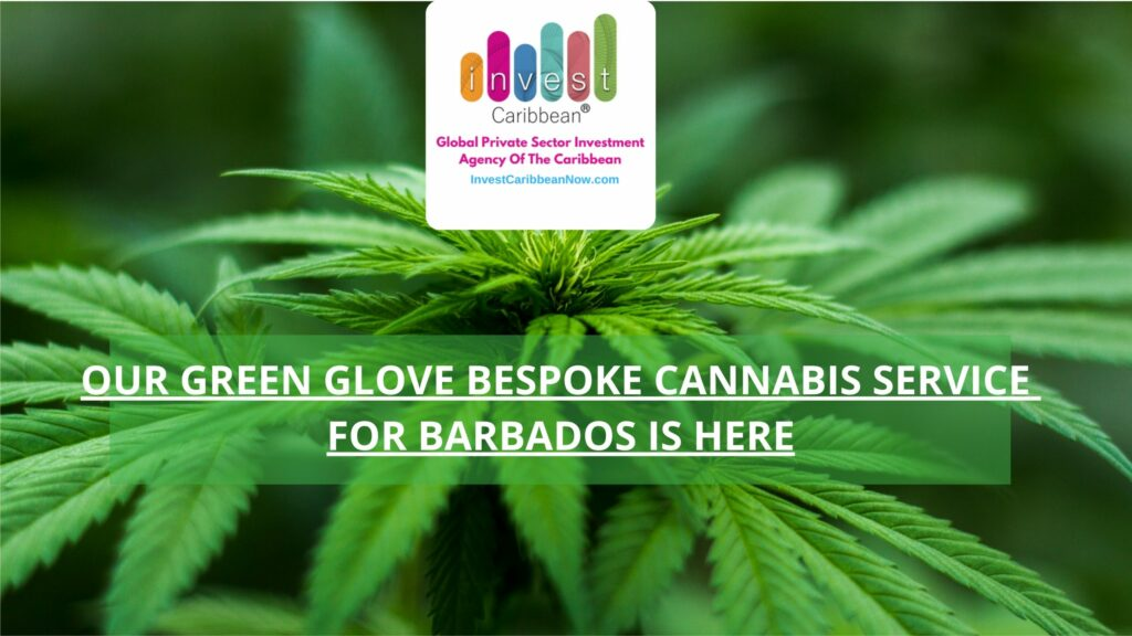 invest-caribbean-green-glove-bespoke-service-barbados