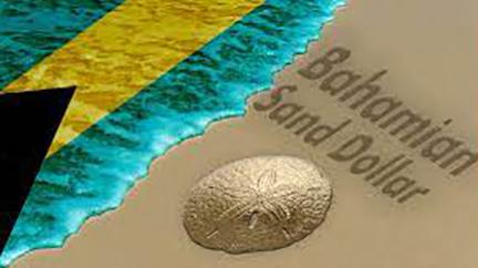 bahamas-sand-dollar
