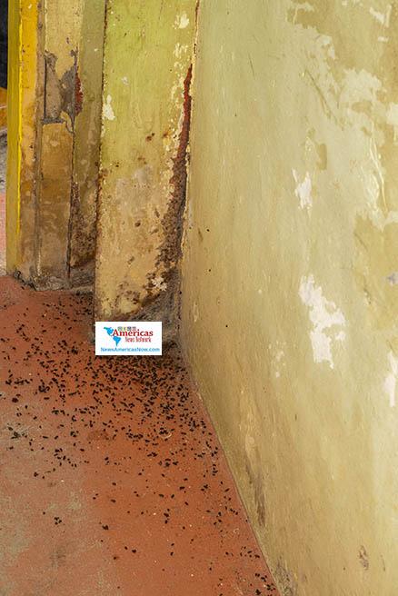 Las paredes agrietadas y los excrementos de animales son parte de la vida en un refugio en San Vicente en medio del desastre volcánico.  (Imagen de NewsAmericasNow.com / Seymour Hinds)